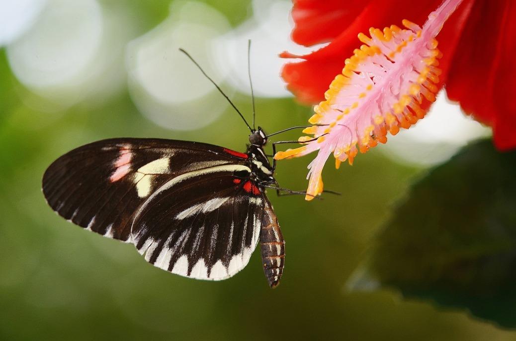 Spirit Butterfly